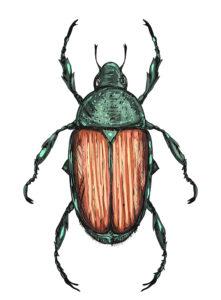 beetles2_mar17